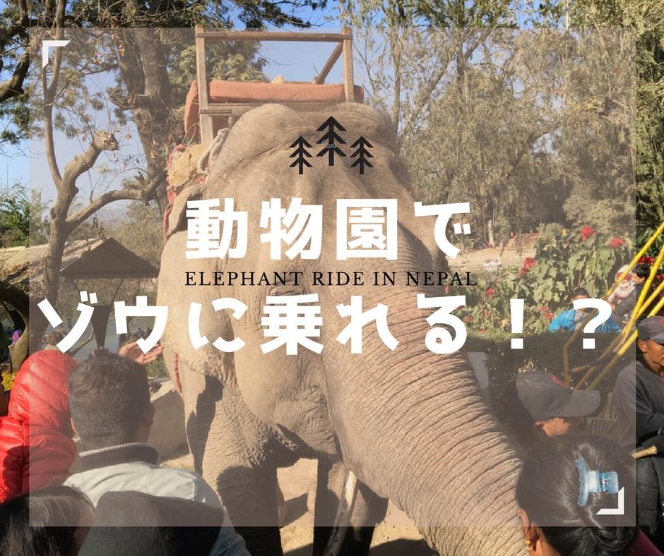 ネパールの動物園ではエレファン...